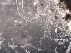 electric-bacteria-microbial-nanowires-640x477